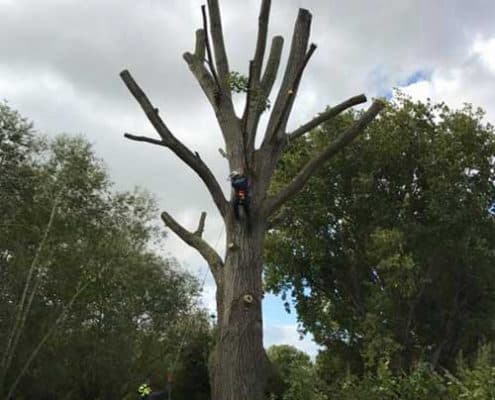 R lugg landscaping and gardening Tree surgery