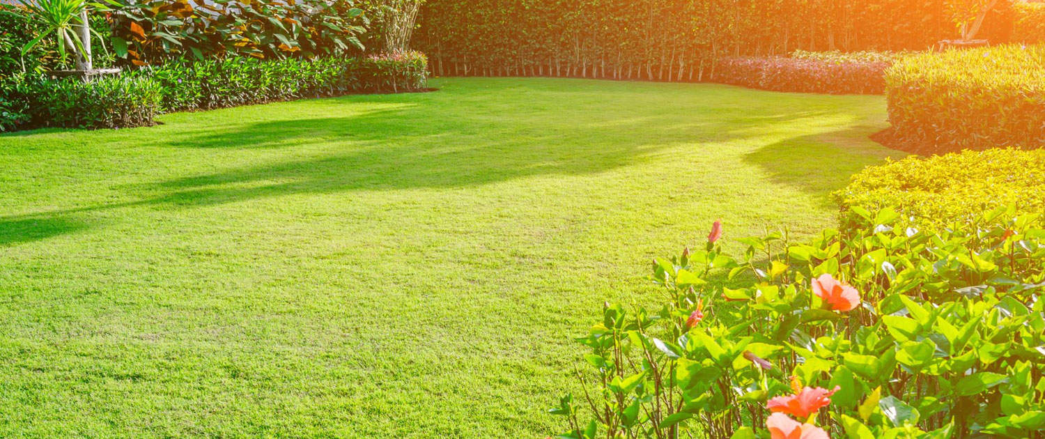 Lawns and artificial grass beautiful turf lawn