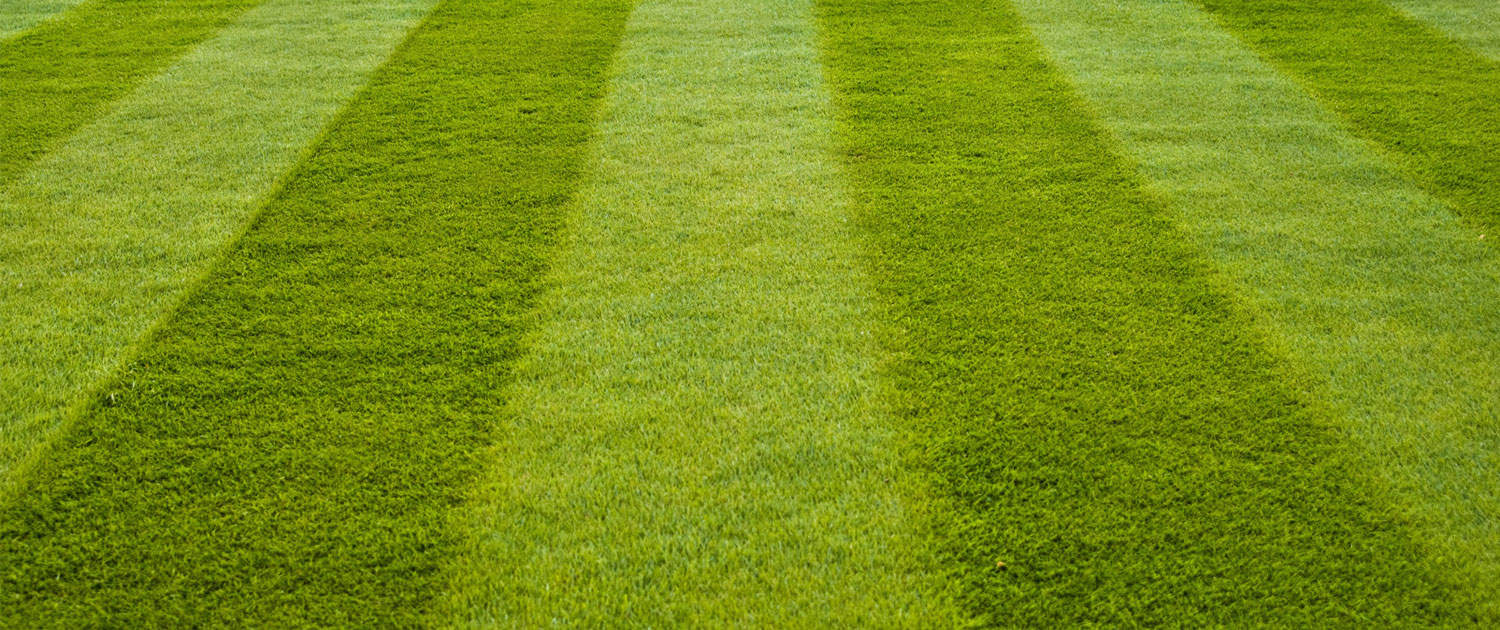Lawns and artificial grass Beautiful lawn with stripes